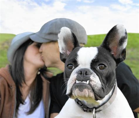 Romance unleashed: How to find love with a fellow dog
