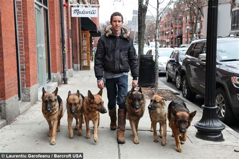 Leader Of The Pack: Dog Whisperer Walks With Six Dogs