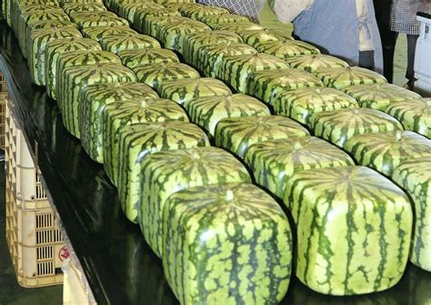 WATCH: How and why square watermelons are grown, Food News